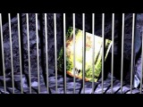 Chained by The Blow Monkeys - Video by Ond