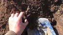 Виноград Опасный вредитель Мраморный хрущ