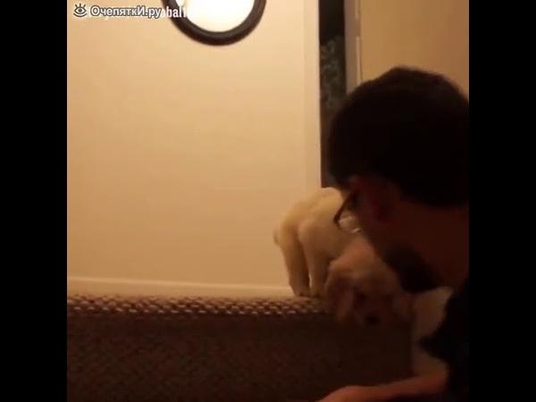 Мужчина учит щенка спускаться по лестнице.