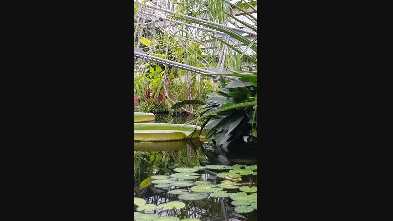 КРАСОТА в оранжерее Ботанич.сада