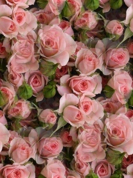 Цветочные и растительные фоны - Страница 2 GWSbq6M2EZc