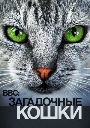 Тайная Жизнь Кошек (2013)