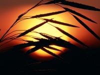 Solar Unknown, 29 июня , Калининград, id180045394