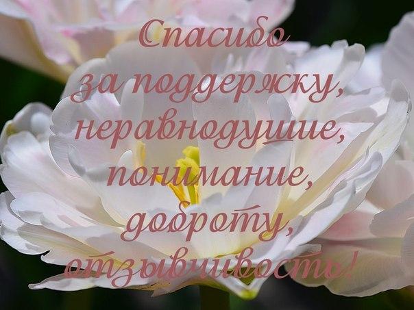 https://pp.vk.me/c403920/v403920941/4313/TXkBWvMZdnM.jpg