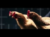 Mercedes Benz Dancing Chickens Commercial