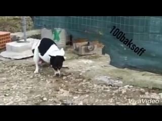 [v-s.mobi]Жесть!! Собака трахает курицу!!.mp4