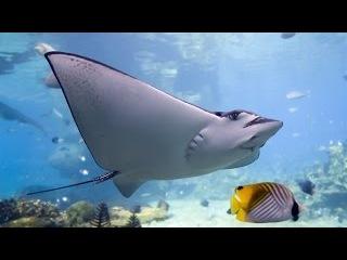 Жизнь на Большом Барьерном рифе. Удивительная природа Австралии (1 серия) \ National Geographic HD