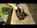 Стая собак напали на человека жесть