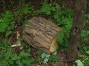 Проблема вирубування зелених насаджень у Слов'янському районі останнім часом постає дуже гостро 08 06 2016
