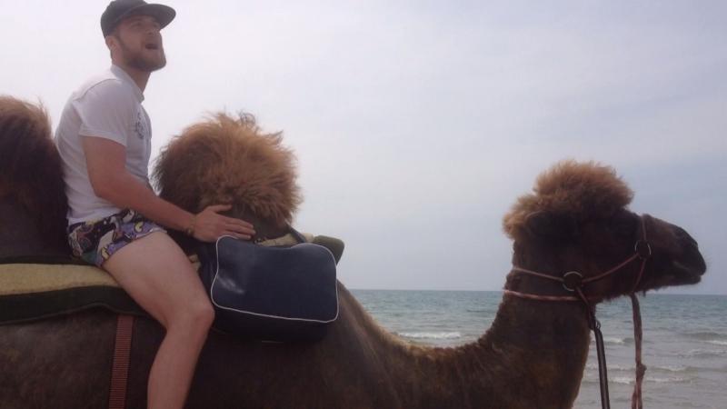 Верблюжий ковбой