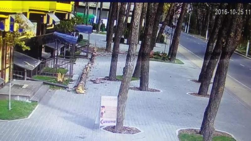В Ирпене дерево чудом не убило людей