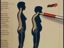 Тело человека. Позвоночник Columna vertebralis.
