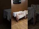 Адлер. ул Гоголя 2х комнатная квартира 5 мин пляж Огонек Посуточная аренда 79182070046