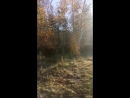 MOV_1240.mp4
