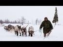 Тундра. Жизнь в Тундре. Удивительное путешествие в тундру. Чукотка. Tundra.