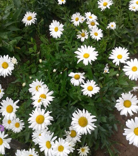 Цветы у Ликки 4GTC42T0AuE