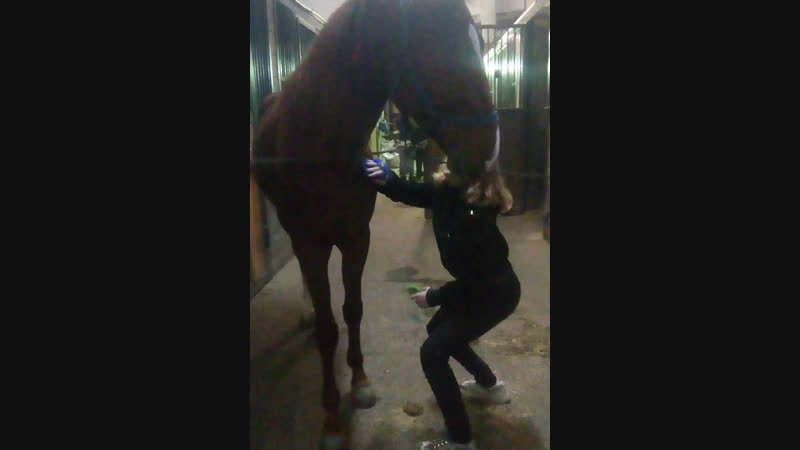 Live: Акбузат Рысачья конюшня
