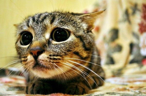 Всем фотки няшных котов!