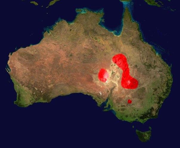 Ареал обитания: в трещинах и щелях в сухих скалистых равнинах, где соприкасаются австралийские штаты Квинсленд, Южная Австралия, Новый Южный Уэльс и Северная Территория.