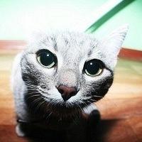 ВКонтакте Владимир Сазонов фотографии