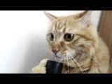 Кот и пылесос