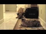 Собаки, которые боятся проходить мимо кошек