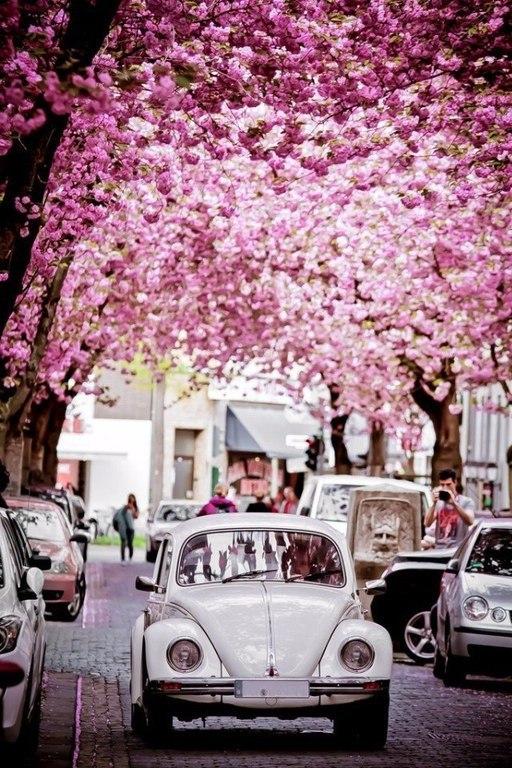Там, за холмами, солнце запело. Сделаешь шаг, за тобою весна... - Страница 27 C2KjBRCTYa8