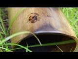 Диджериду из палисандра со сменными мундштуками