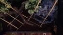 Террариум для Зеленого питона(Morelia viridis)