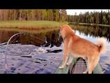 Рыбалка на слиянии двух рек в Карелии. Ловля щуки на самоловки и спиннинг. Ночёвка. Белые ночи.