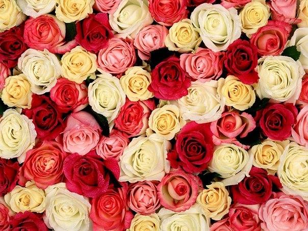 Цветы доставка по спб бесплат updated the