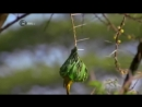 Что строят животные Архитекторы мира дикой природы. Фильм Discovery Science HD .2017
