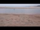 Индийская прудовая цапля