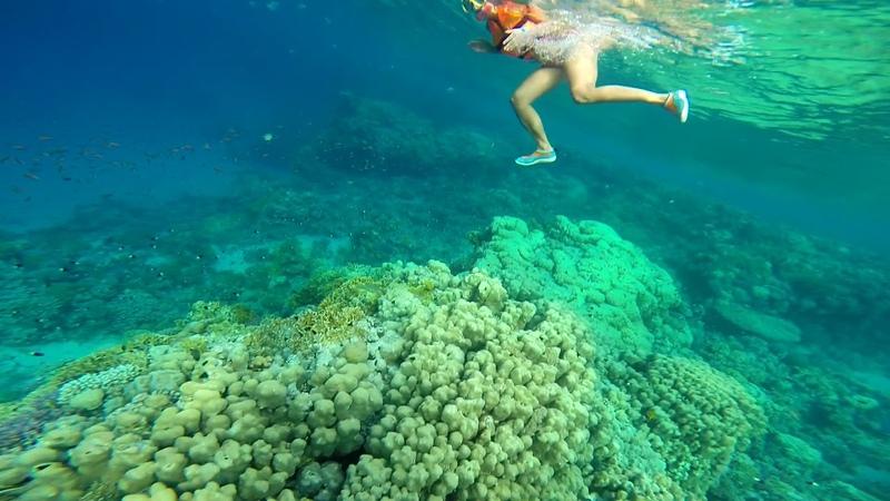 Melton Beach (Melia Sinai)5* Египет, Шарм-Эль-Шейх, бухта Рас Насрани