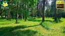 Пение птиц в весеннем лесу   3 часа звуки природы для глубокого сна.