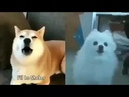 Overwatch: I'm already tracer (doggo version)