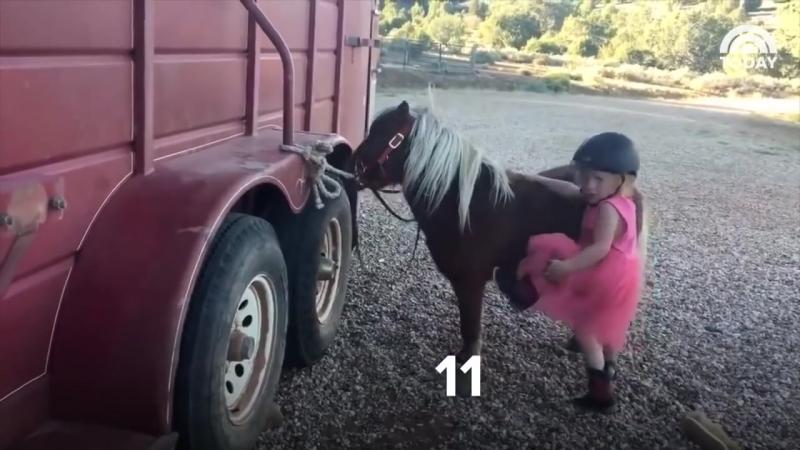 Никогда не сдавайся! Девочка и пони