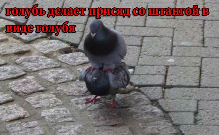 http://cs402322.userapi.com/v402322105/37b4/oubyoLifFtU.jpg
