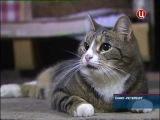 6 апреля в Санкт-Петербурге отметили День эрмитажного кота