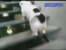 Приколы с кошками и котами.mp4