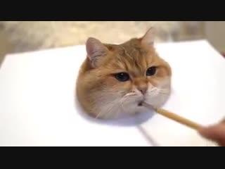 как нарисовать реалистичного кота
