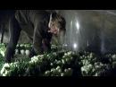 Les 7 763 roses offertes par les web-pèlerins de Lourdes ont été déposées ce matin à la Grotte