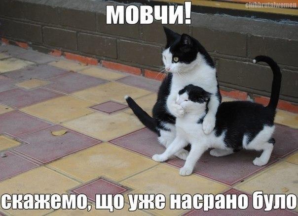 Коти, скажемо що було вже насрано