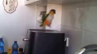 Крутой татарский попугай. Отжигает парень !!!