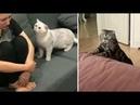 ردة فعل القطط عند رؤية اصحابها حزينين 😚😿ا1604