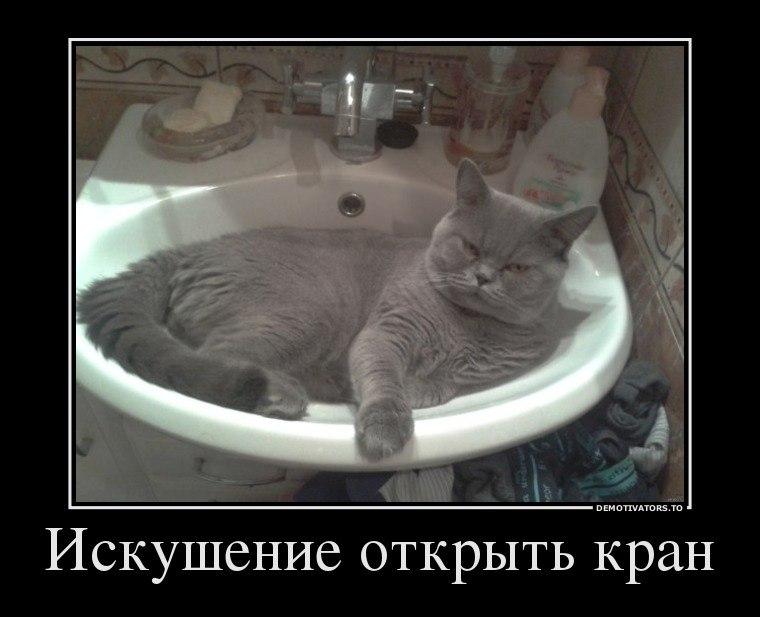 Максим и антон петров фото его