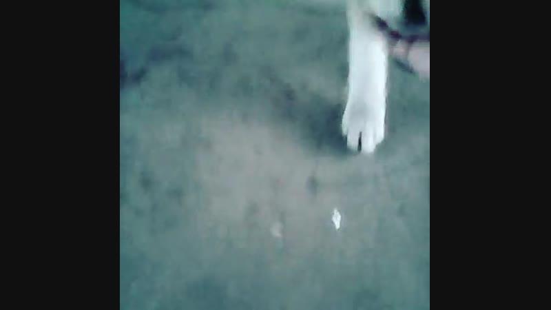 Хорошая собака
