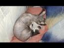 Лысая и котя мелкий