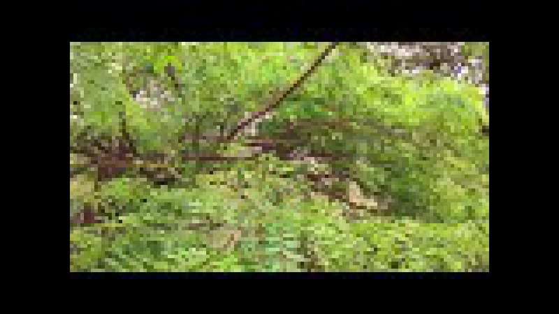 Jacarandá Florido: Canto do Sabiá. Tiguera 360. JF, MG, Brasil. IMG_0202. 182,4 MB. 10h22. 07nov17
