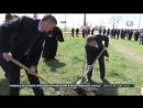 Высадка деревьев в память о героях ВОВ